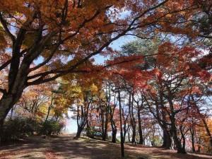 上ノ山公園2014.11.3-2