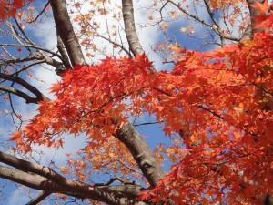 上ノ山公園2014.11.3-3
