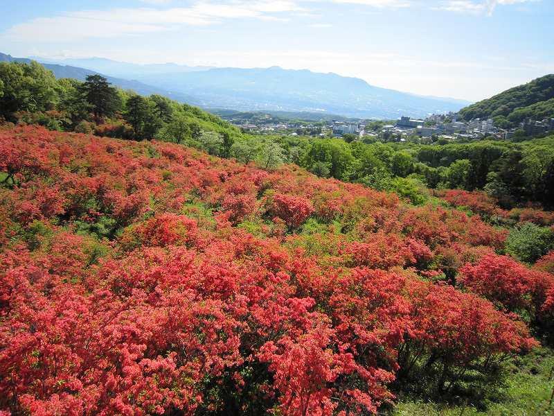 5月は長峰公園の「ヤマツツジ」が絶景!