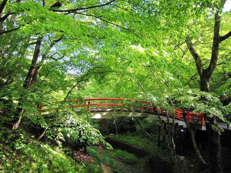 河鹿橋周辺の新緑情報!