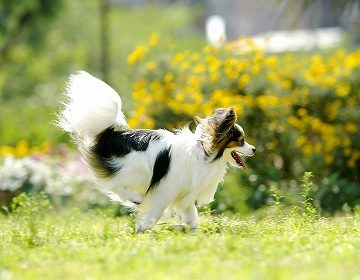 【HP限定】愛犬と過ごす伊香保の休日(ペット専用プラン)大好評です。
